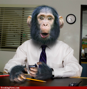 Post image for Monkey Business