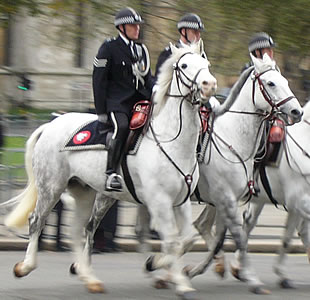 Mounted Police at the Opening of Parliament