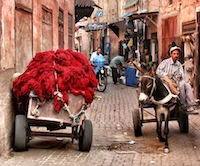Wool-cart-with-donkey-new-edit-2